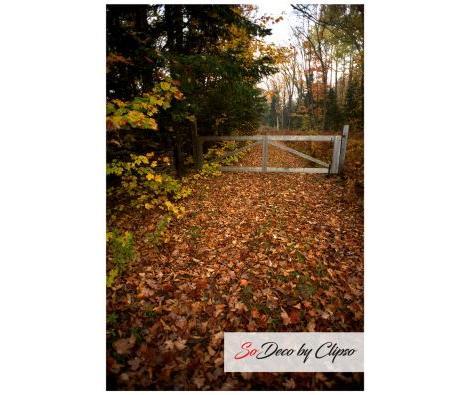 Clipso - TM Algonquin Park Ontario Canada 3